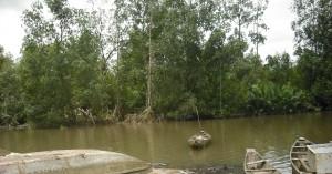 La mangrove de Youpwe en danger