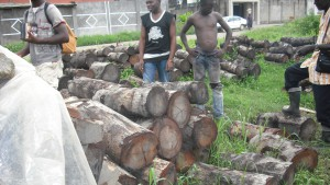 Vente de bois de la mangrove (rhizophora racemosa) à Youpwe